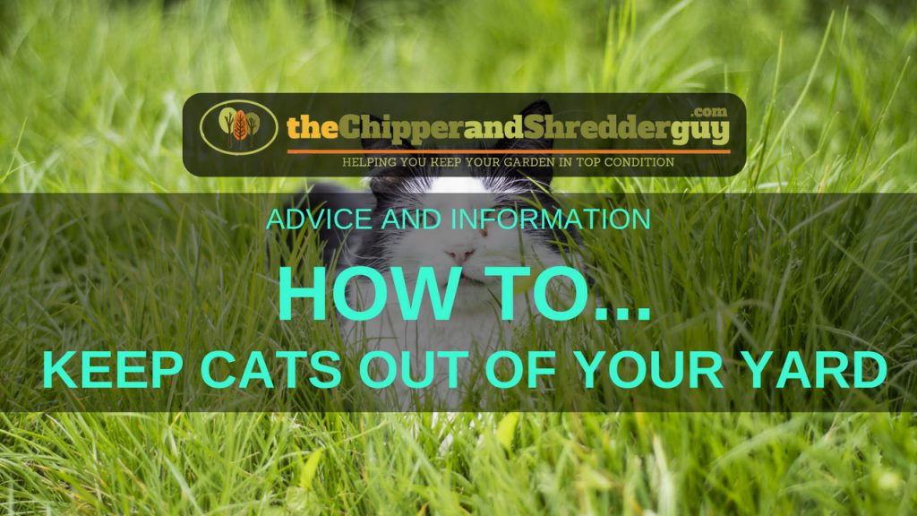 How To Keep Cats Out Of Your Yard - 10 Methods