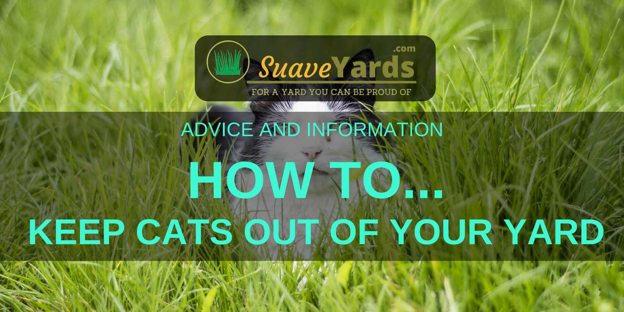 How To Keep Cats Out Of Your Yard Ten Fool Proof Methods Welcome To Suave Yards For A Yard