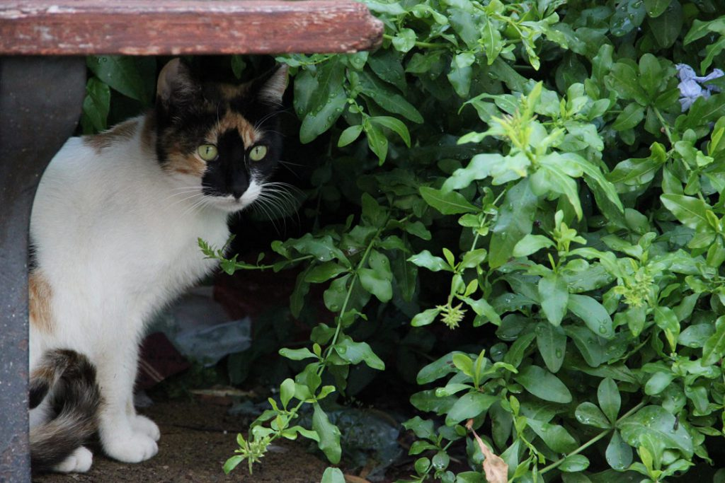 how to keep cats out of your yard like this one