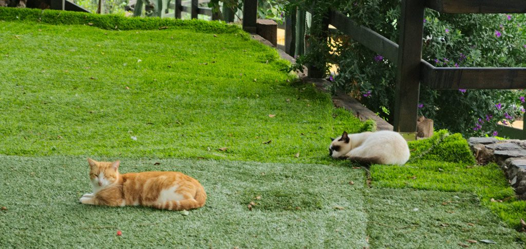 how to keep cats out of your yard like these two