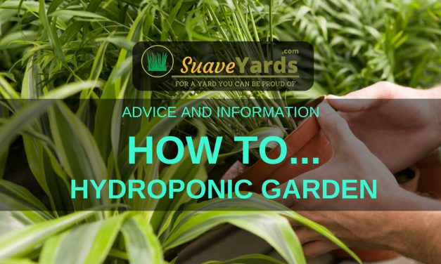 How To Hydroponic Garden