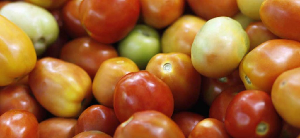 How to hydroponic garden and grow tomatoes
