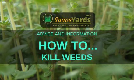 The Best Way To Kill Weeds – Four Methods Examined!