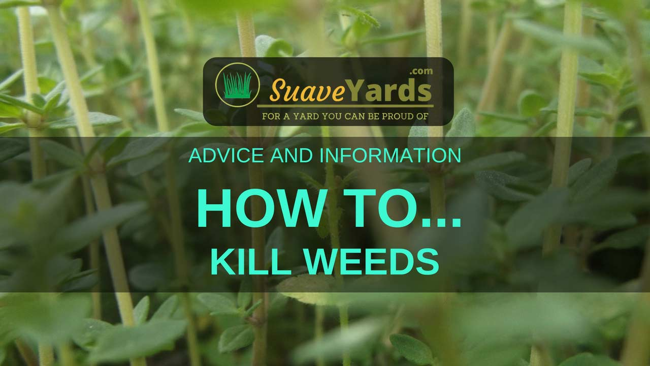 The Best Way To Kill Weeds - 4 Top Tips For Banishing Weeds