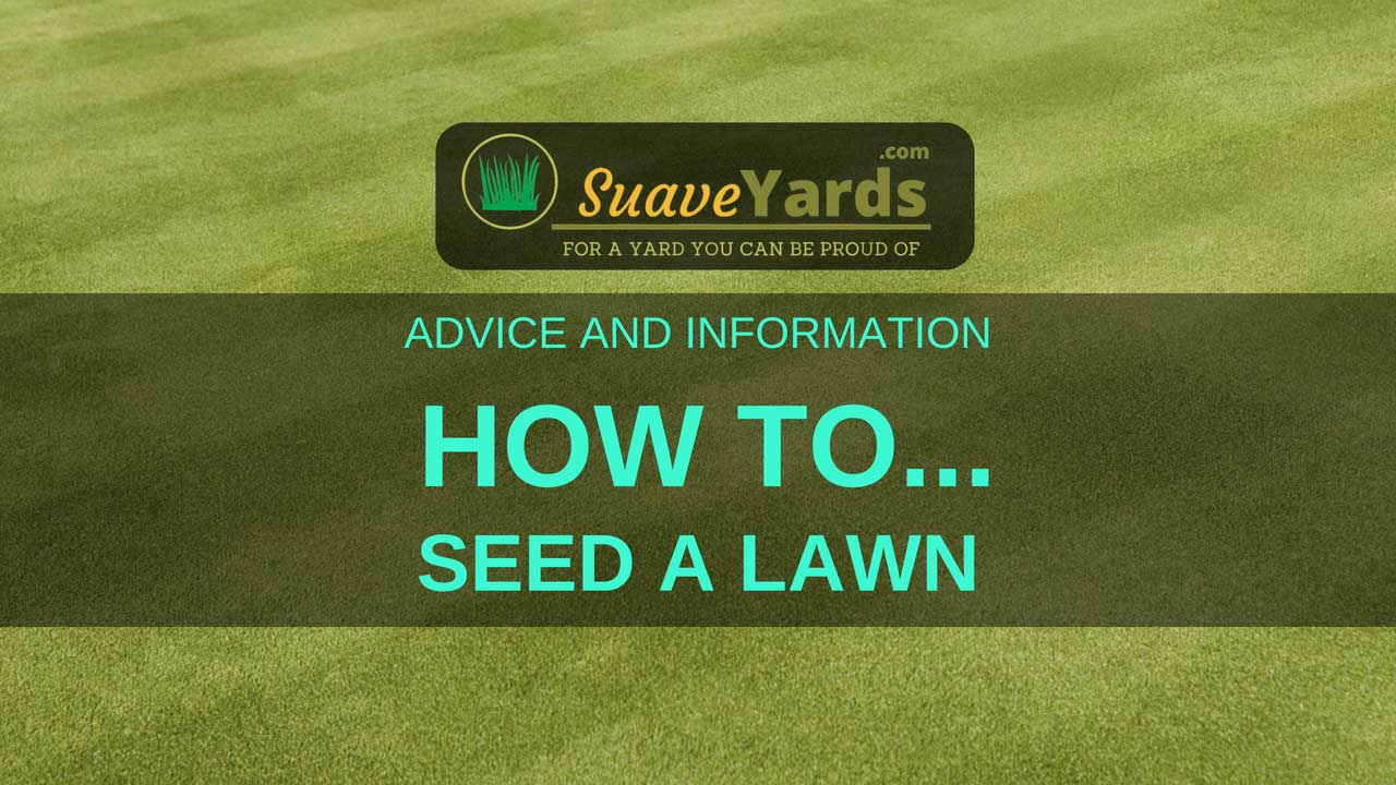 How to seed a lawn header