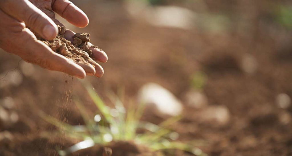 Soil in persons hand