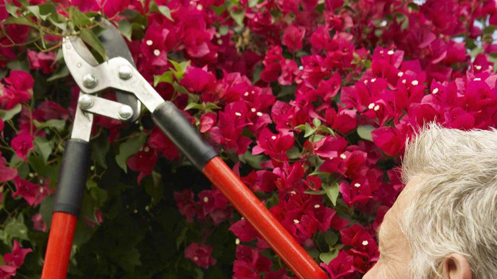 Man trimming flowers