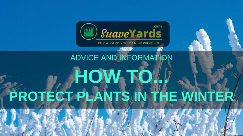 Protecting Plants In the Winter