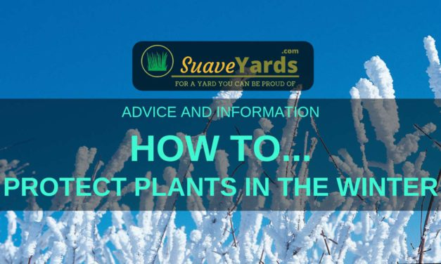 Protecting Plants During The Winter – 9 (Easy) Steps