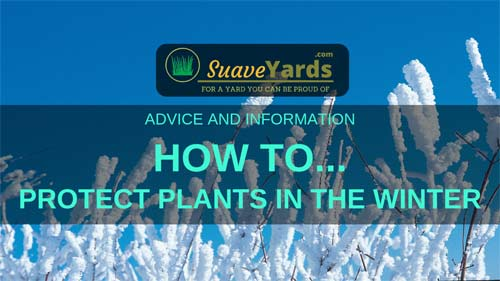 How To Protect Plants in Winter