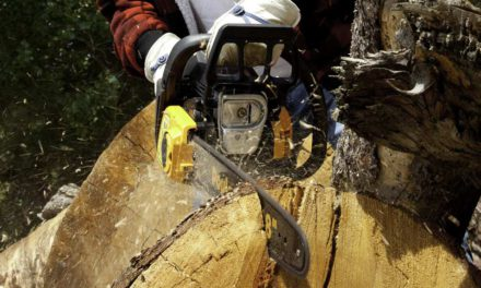 Best 40cc Chainsaw