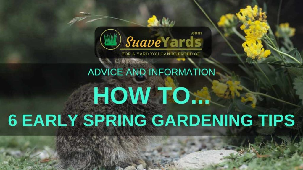 Early Spring Gardening Tips