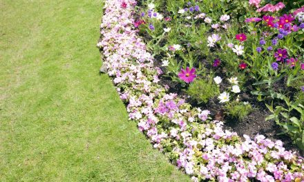 July Gardening Tips – Make The Most Of The Sun!