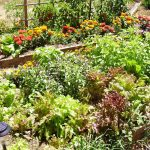 7 [Sensational] Raised Bed Gardening Tips
