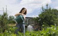 Lady watering plants