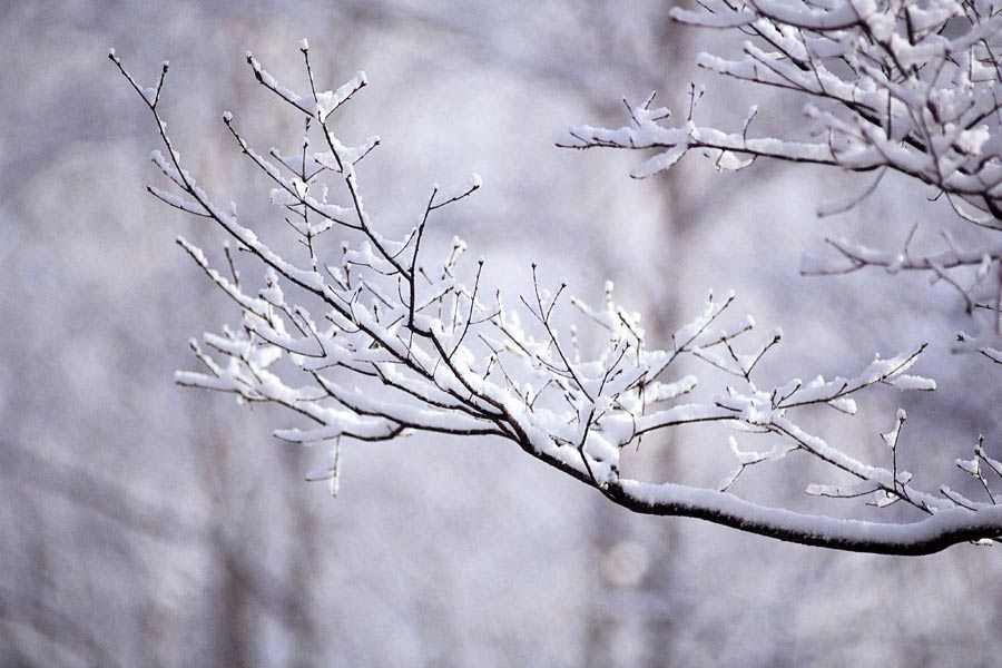 Branches with snow on