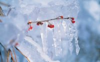 Twig with ice on