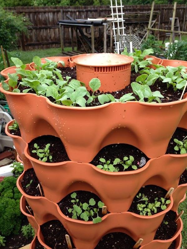 Garden Tower 2 seeds