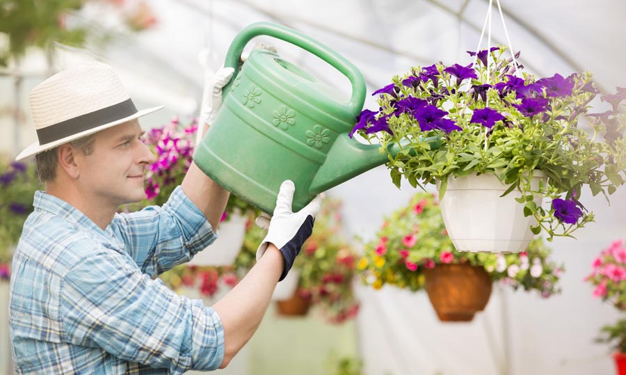 Man watering hanging basket