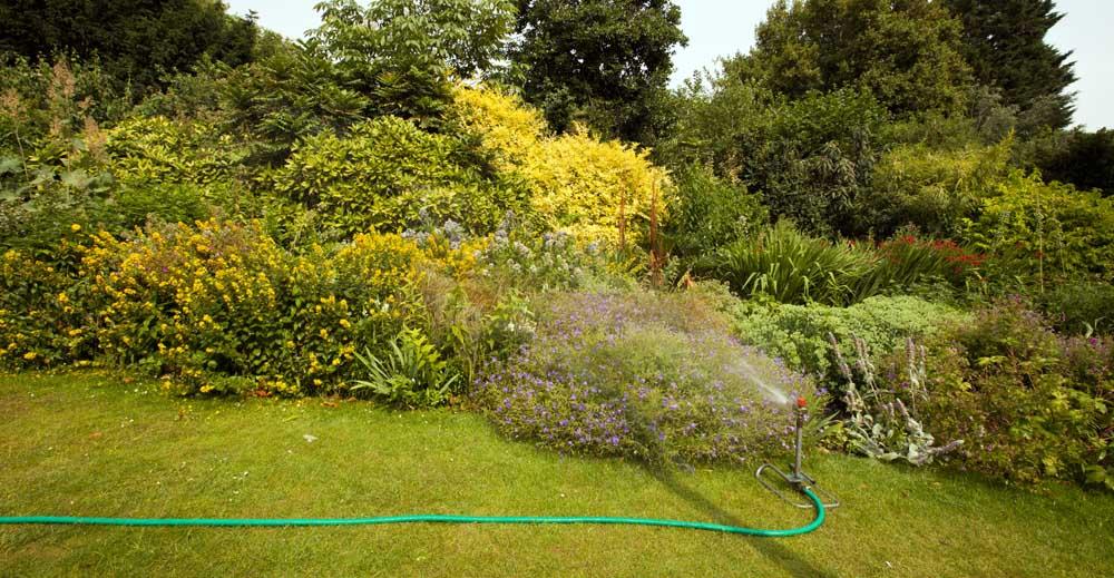 Hose in garden