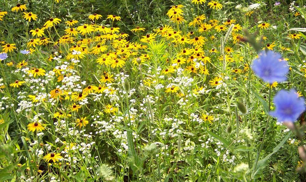 Flowers and weeds in garden