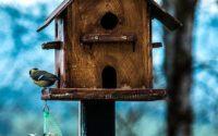 Bird box with birds on it