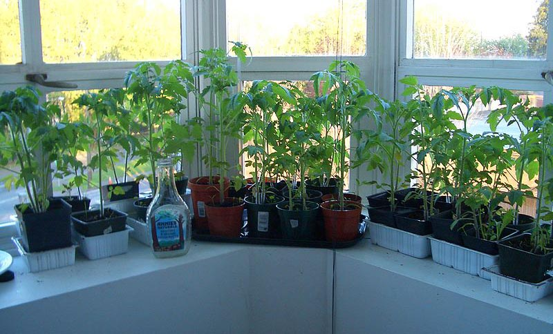 Plants in pots on window ledge