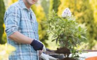 Confident man planting pot at garden