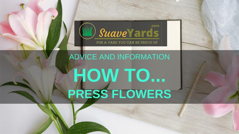 How to press flowers header
