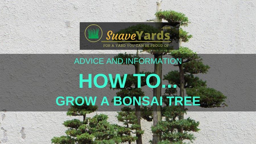 How to grow a bonsai tree header