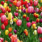 Range of colorful flowers in bloom