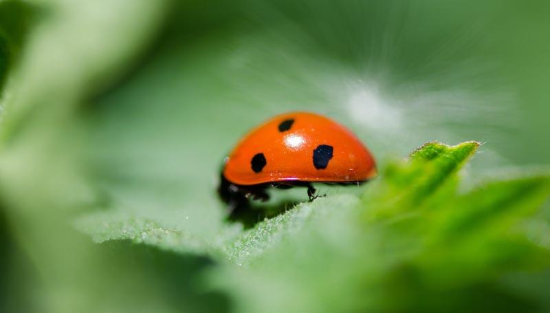 Close up of ladybug