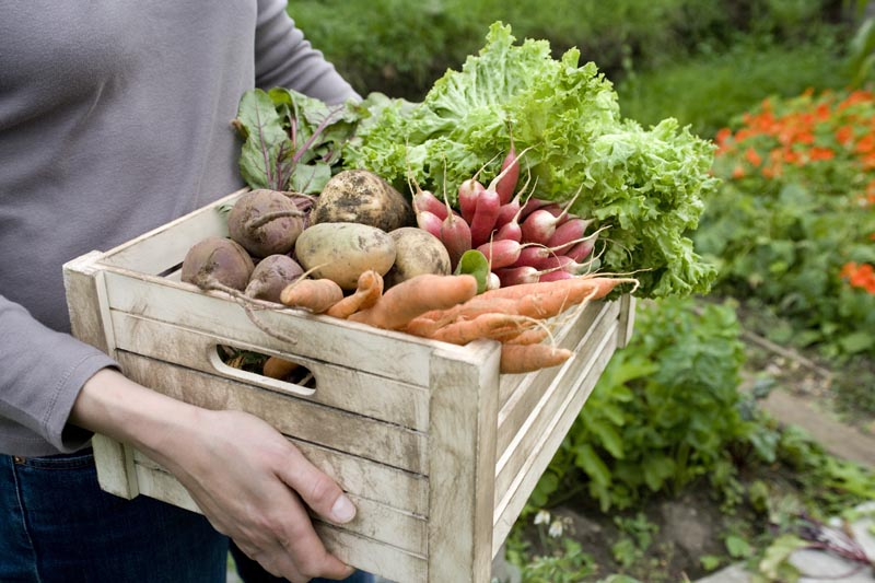 Woman carrying crate of vegetables, mid section