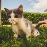 Kitten sniffing flower