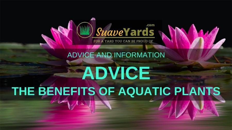 Benefits of Aquatic Plants header