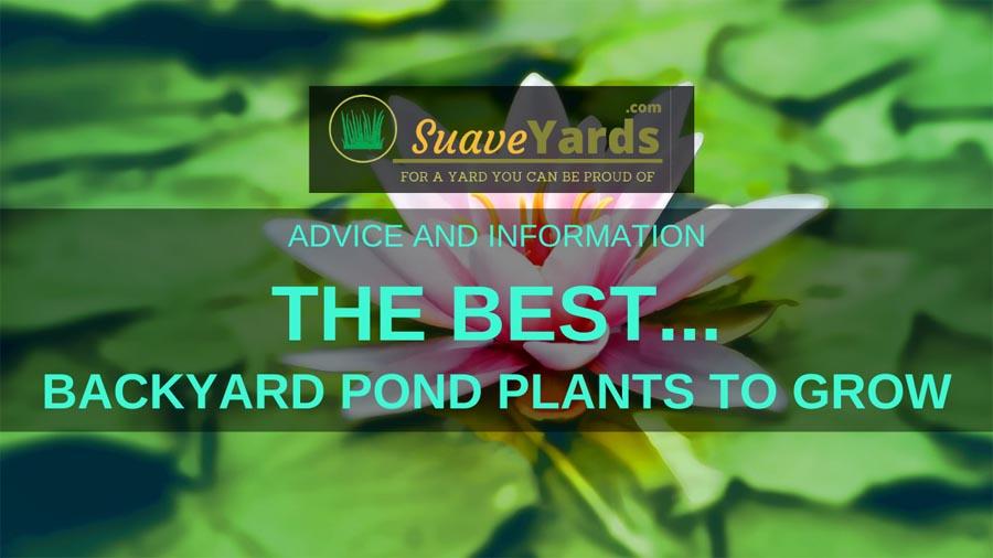 Best Backyard Pond Plant Header