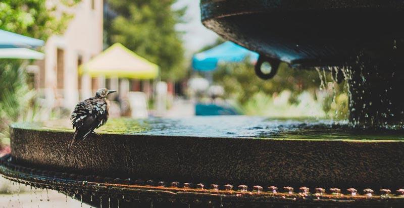 Bird in water fountain
