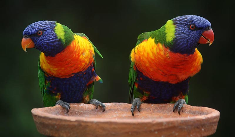 Two colorful birds next to each other