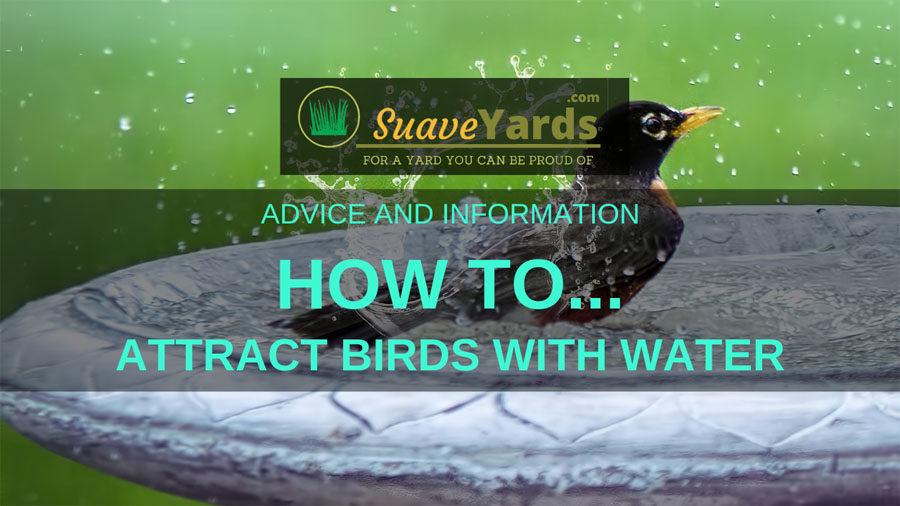 How to attract birds with water header