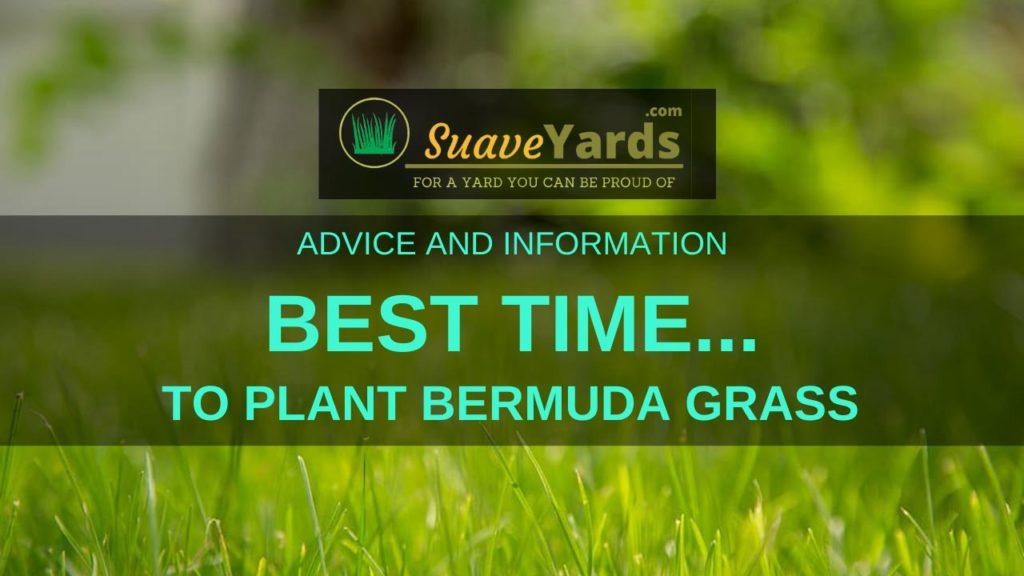 Best time to plant Bermuda Grass header