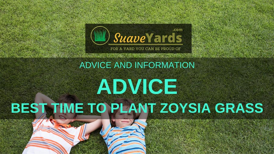 Best time to plant Zoysia Grass header