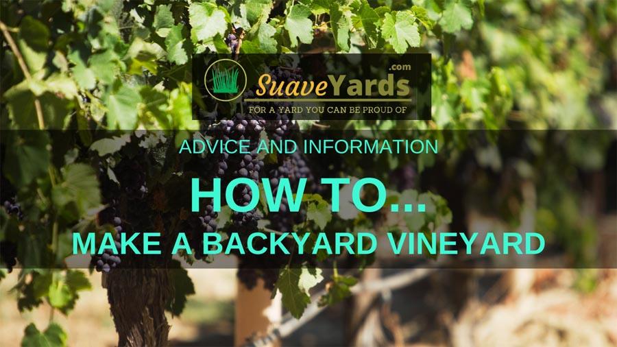 How to make a backyard vineyard header
