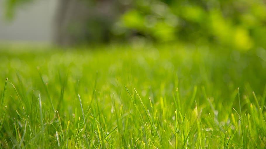 Bermuda grass close up