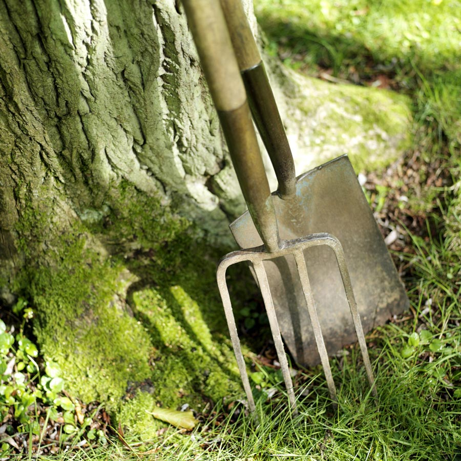 Spade and fork resting against tree
