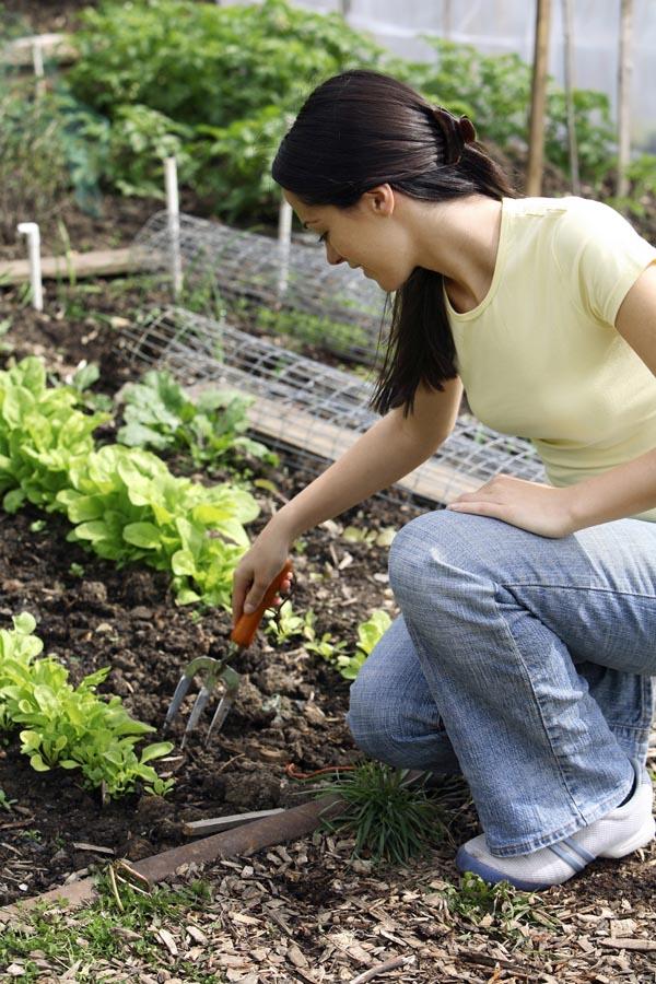 Lady forking soil