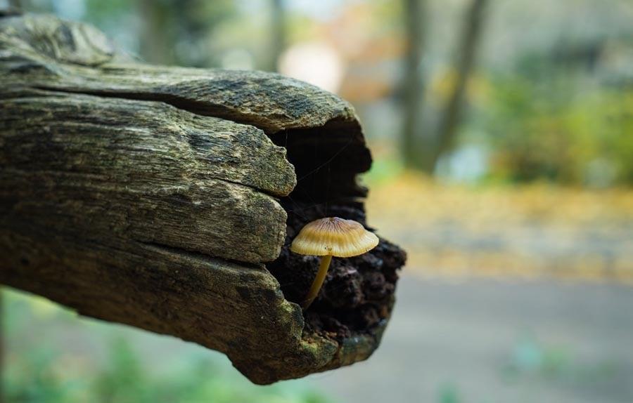 Mushroom growing on log