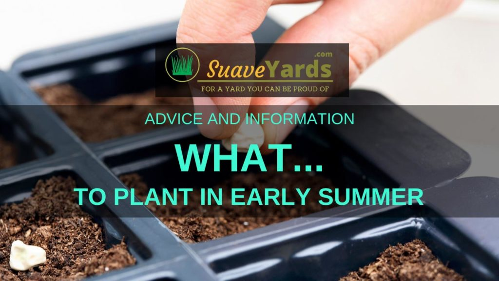 What to plant in early summer