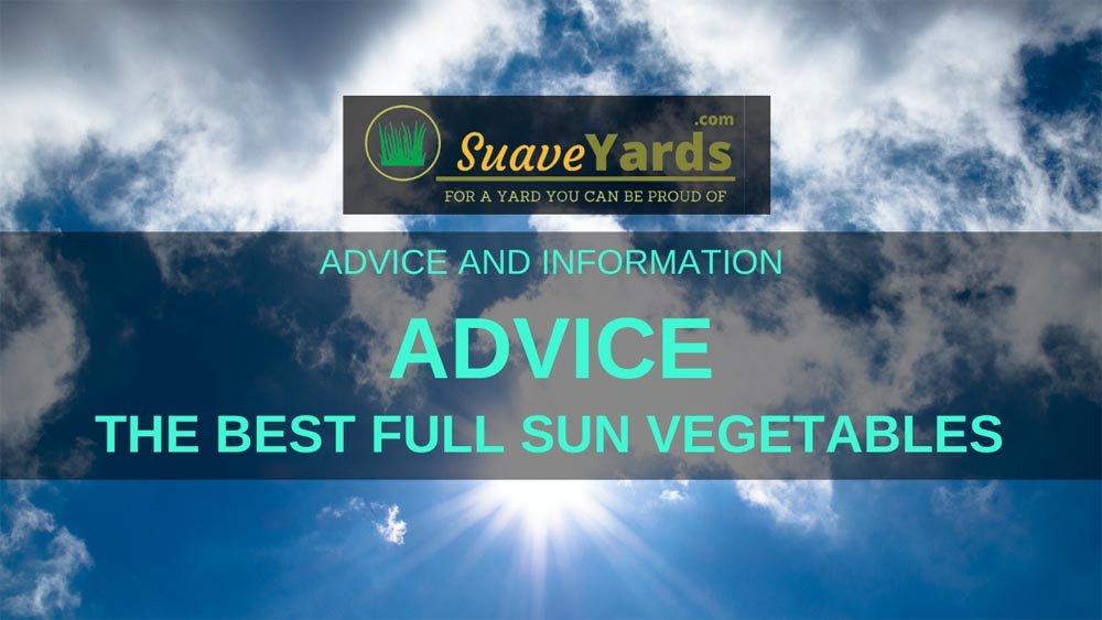 Best Full Sun Vegetables header