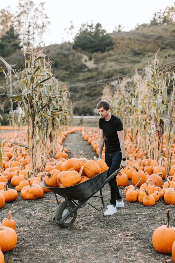 Man with pumpkin in wheelbarrow