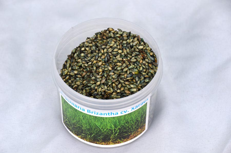 Tub of grass seed